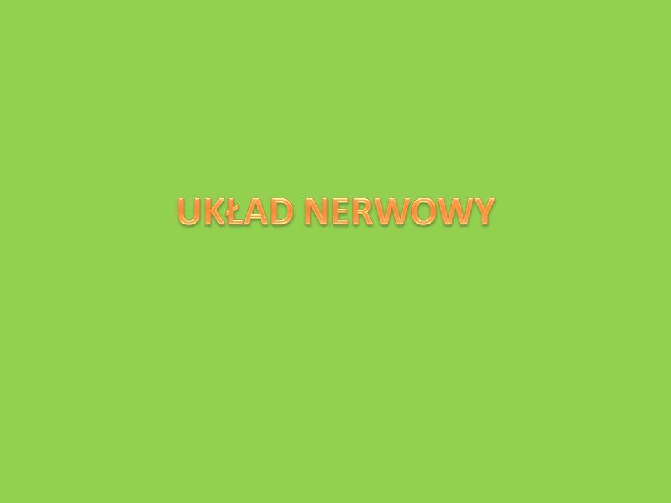 1.Budowa neuronu.Podstawową jednostką budując ą układ nerwowy jest komórka nerwowa czyli neuron.