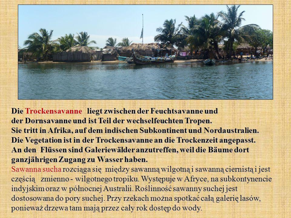 Die Trockensavanne liegt zwischen der Feuchtsavanne und der Dornsavanne und ist Teil der wechselfeuchten Tropen. Sie tritt in Afrika, auf dem indische