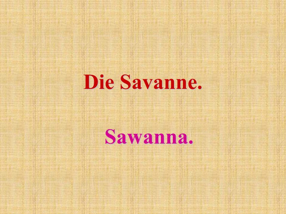 Die Savanne. Sawanna.