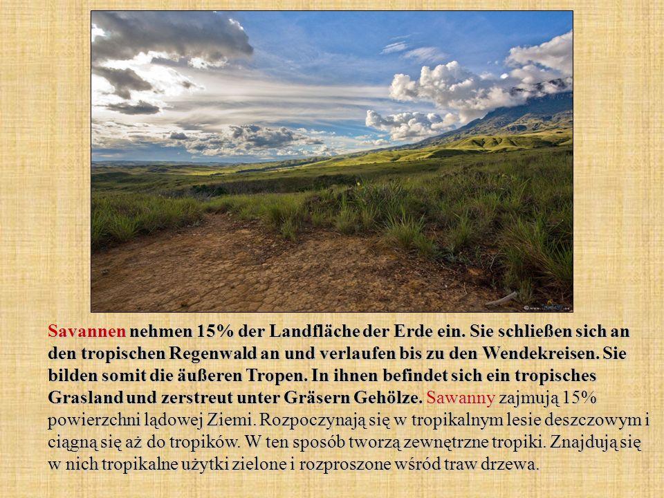 Savannen nehmen 15% der Landfläche der Erde ein. Sie schließen sich an den tropischen Regenwald an und verlaufen bis zu den Wendekreisen. Sie bilden s
