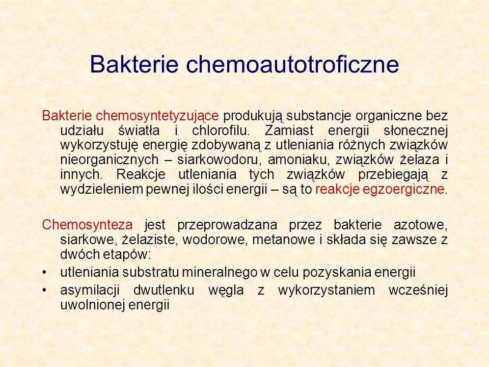 Bakterie chemoautotroficzne Bakterie chemosyntetyzujące produkują substancje organiczne bez udziału światła i chlorofilu. Zamiast energii słonecznej w