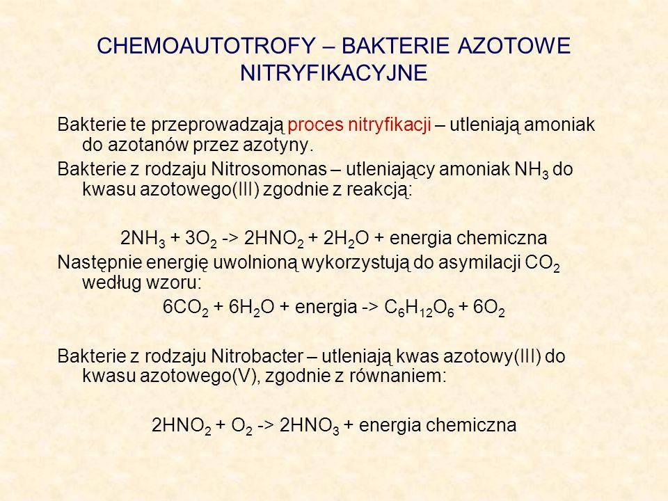 CHEMOAUTOTROFY – BAKTERIE AZOTOWE NITRYFIKACYJNE Bakterie te przeprowadzają proces nitryfikacji – utleniają amoniak do azotanów przez azotyny. Bakteri