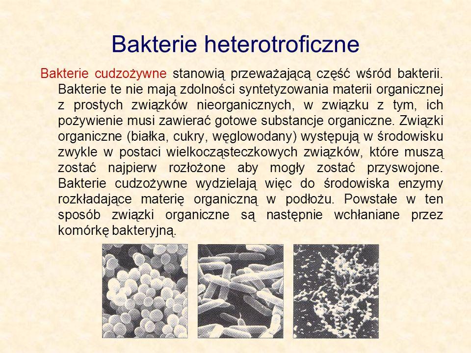 Bakterie heterotroficzne Bakterie cudzożywne stanowią przeważającą część wśród bakterii. Bakterie te nie mają zdolności syntetyzowania materii organic