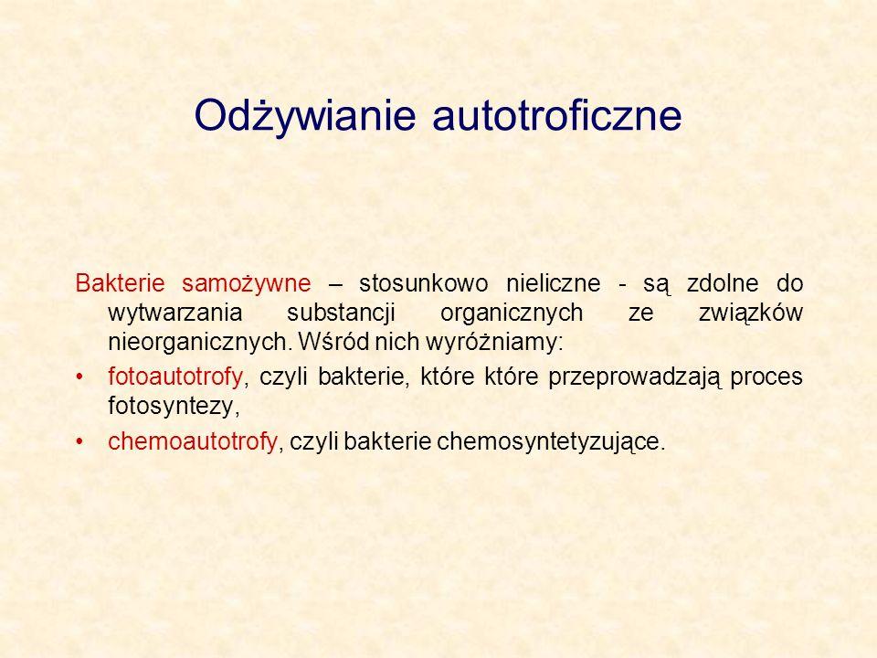 Odżywianie autotroficzne Bakterie samożywne – stosunkowo nieliczne - są zdolne do wytwarzania substancji organicznych ze związków nieorganicznych. Wśr