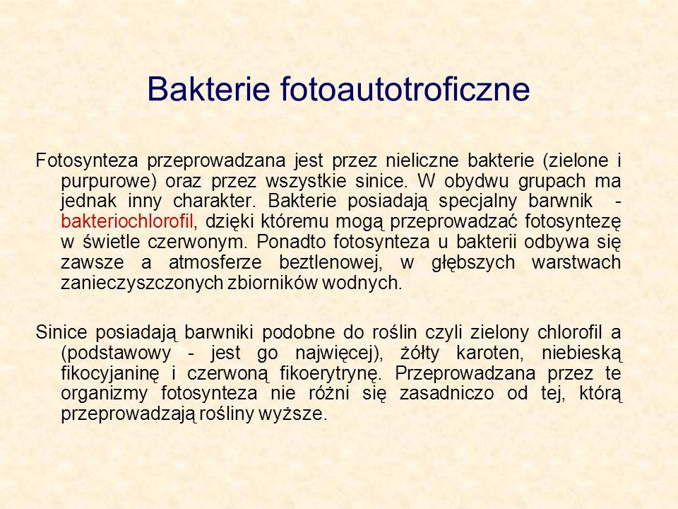 Bakterie chemoautotroficzne Bakterie chemosyntetyzujące produkują substancje organiczne bez udziału światła i chlorofilu.