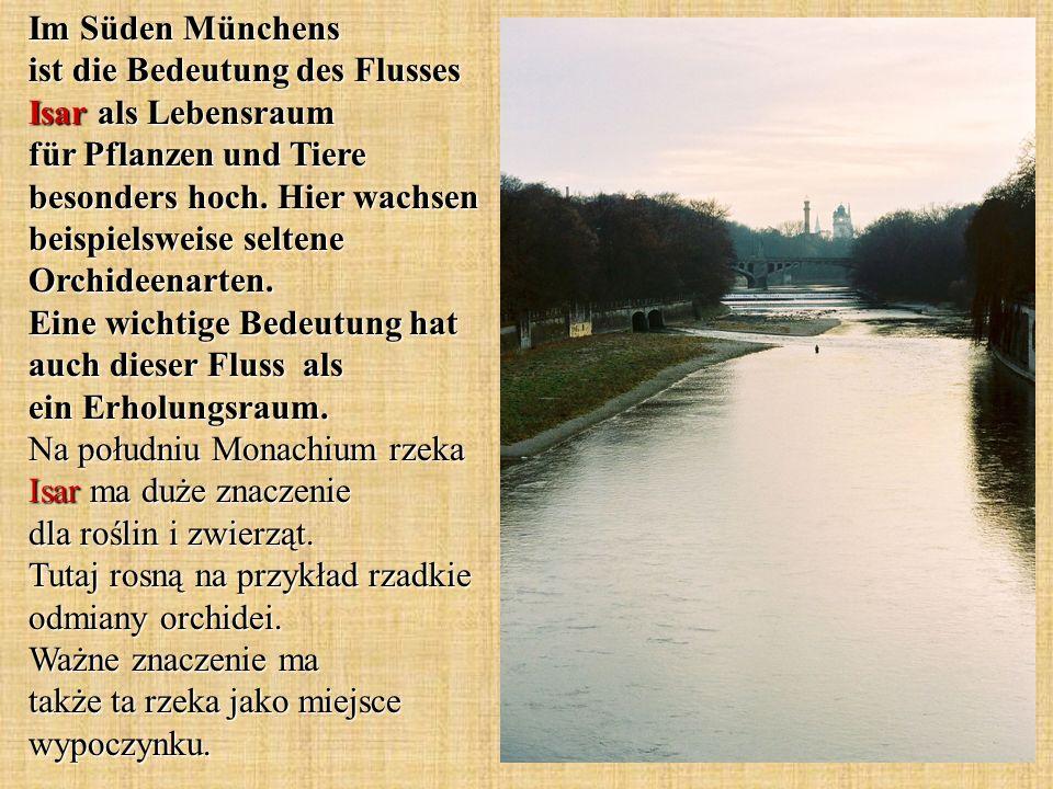 Im Süden Münchens ist die Bedeutung des Flusses Isar als Lebensraum für Pflanzen und Tiere besonders hoch. Hier wachsen beispielsweise seltene Orchide