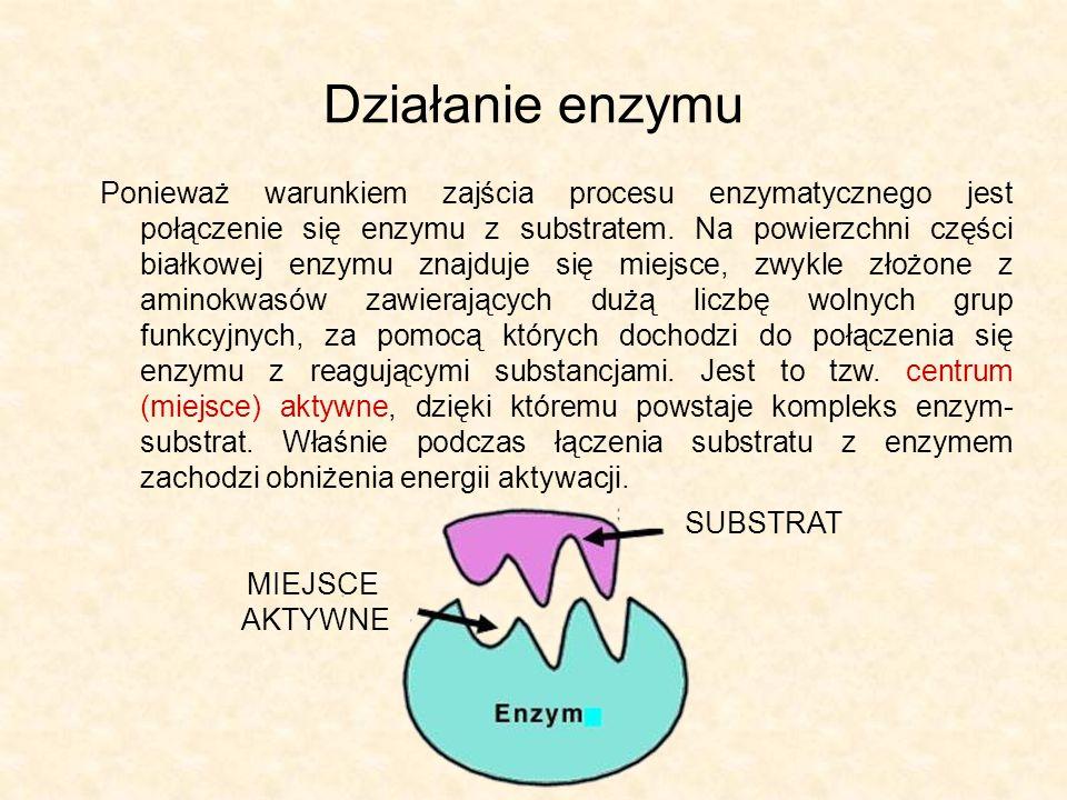 Kataliza enzymatyczna Kataliza enzymatyczne przebiega według następujących etapów: aktywowanie centrum i substratów, mające na celu ich przestrzenne dopasowanie wytworzenie kompleksu enzym-substrat, co obniża energię aktywacji i umożliwia szybkie zajście procesu oddzielenie enzymu od produktów KOENZYM SUBSTRAT ENZYM KOMPLEKS ENZYM-SUBSTRAT PRODUKTY