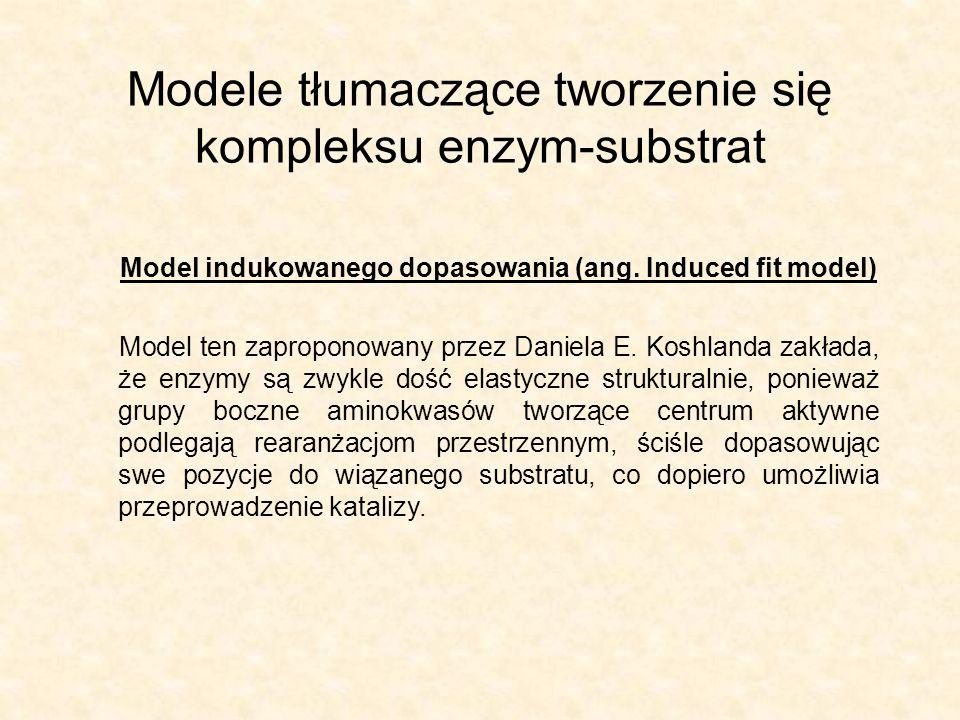 Modele tłumaczące tworzenie się kompleksu enzym-substrat Model indukowanego dopasowania (ang.