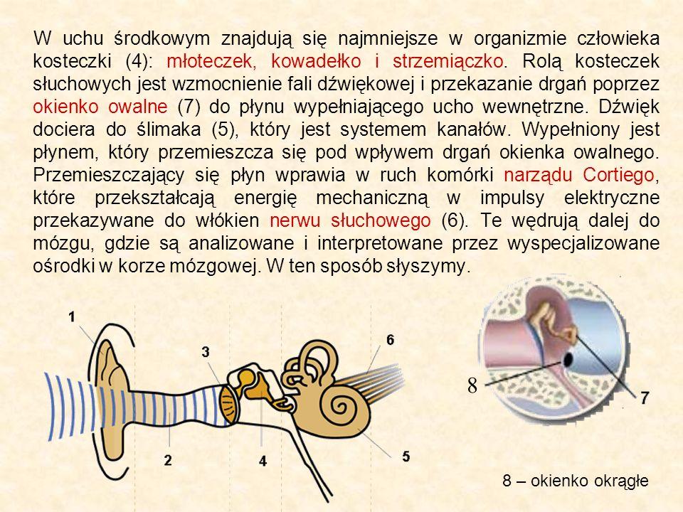 W uchu środkowym znajdują się najmniejsze w organizmie człowieka kosteczki (4): młoteczek, kowadełko i strzemiączko. Rolą kosteczek słuchowych jest wz