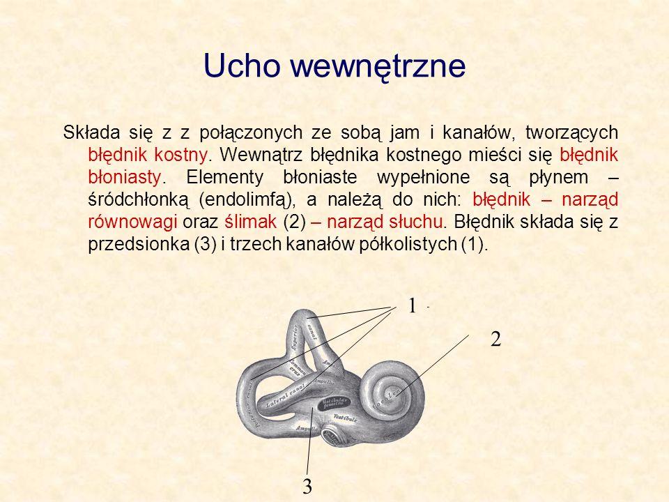Ucho wewnętrzne Składa się z z połączonych ze sobą jam i kanałów, tworzących błędnik kostny. Wewnątrz błędnika kostnego mieści się błędnik błoniasty.