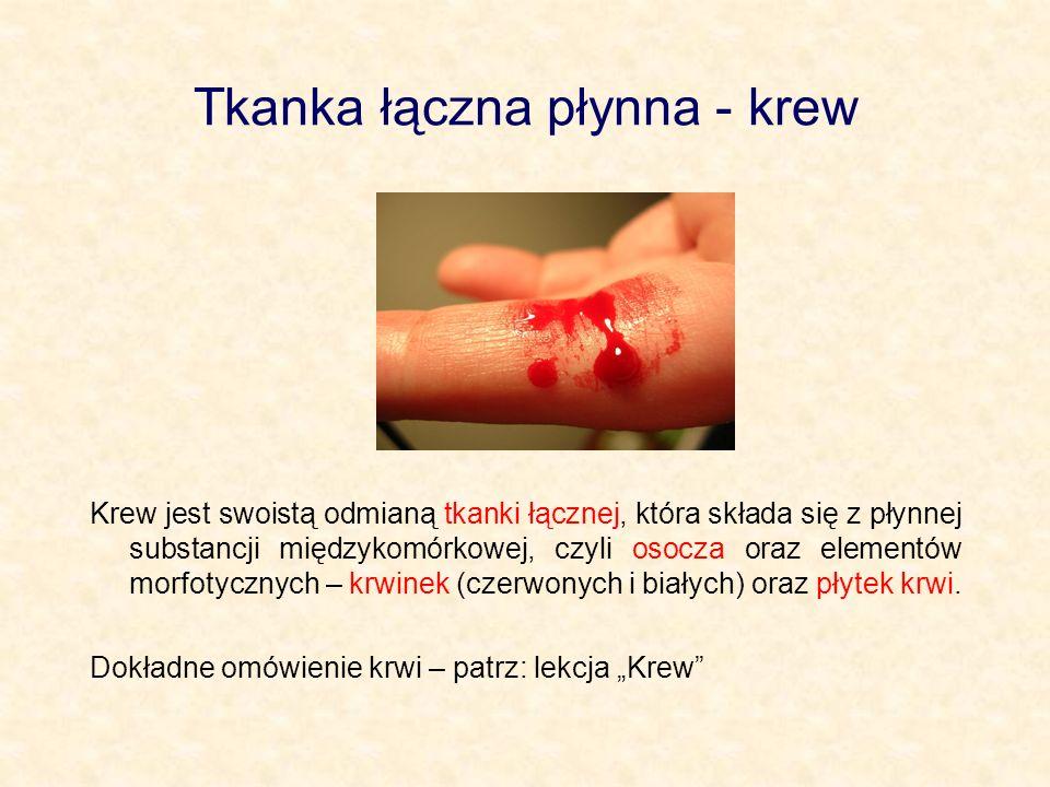 Tkanka łączna płynna - krew Krew jest swoistą odmianą tkanki łącznej, która składa się z płynnej substancji międzykomórkowej, czyli osocza oraz elemen