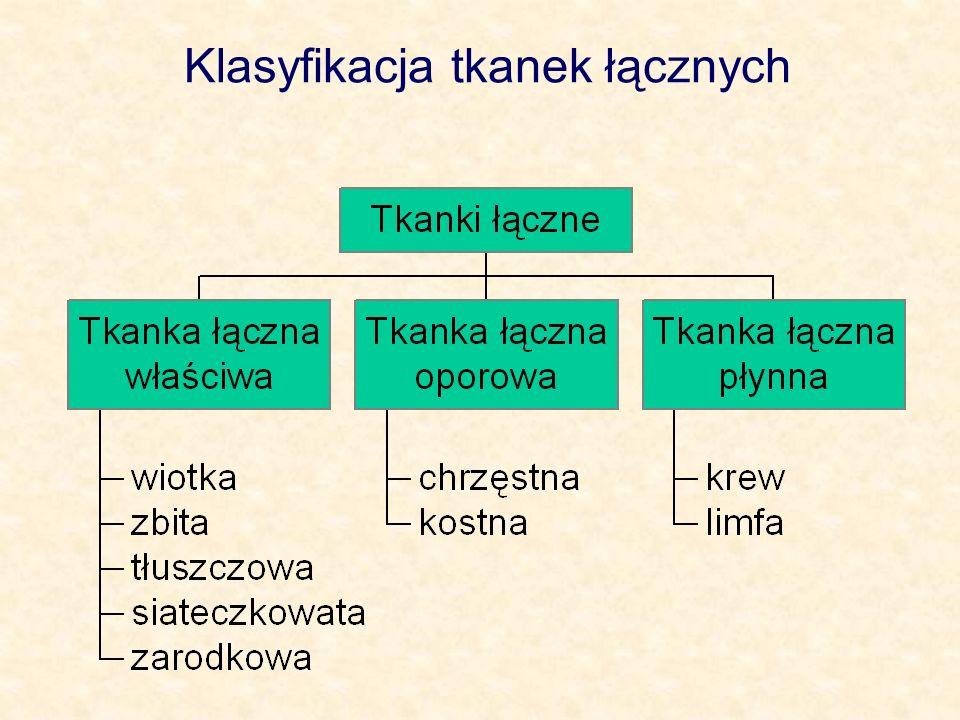 Klasyfikacja tkanek łącznych