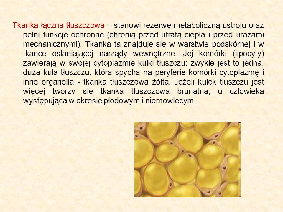 Tkanka łączna tłuszczowa – stanowi rezerwę metaboliczną ustroju oraz pełni funkcje ochronne (chronią przed utratą ciepła i przed urazami mechanicznymi