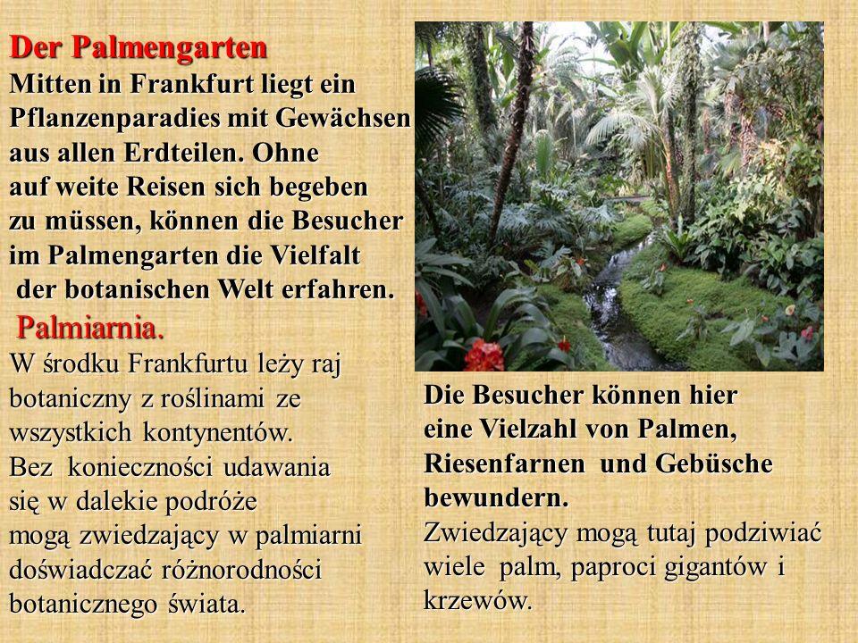 Der Palmengarten Mitten in Frankfurt liegt ein Pflanzenparadies mit Gewächsen aus allen Erdteilen.