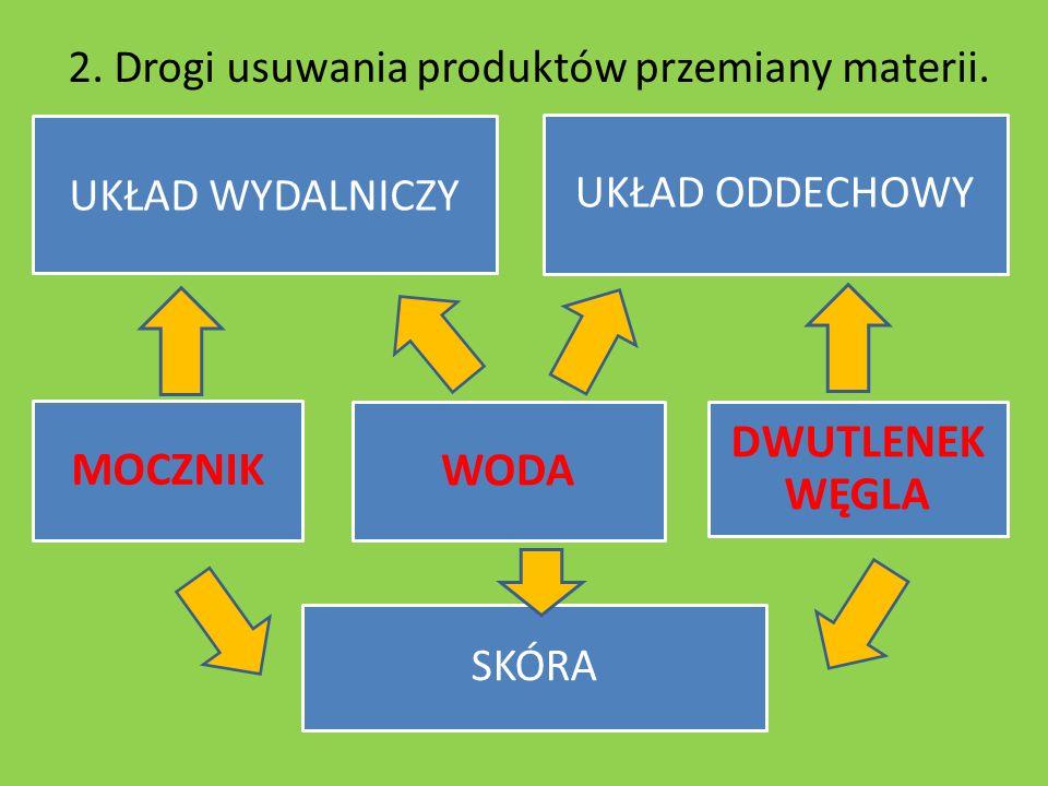 2.Drogi usuwania produktów przemiany materii.