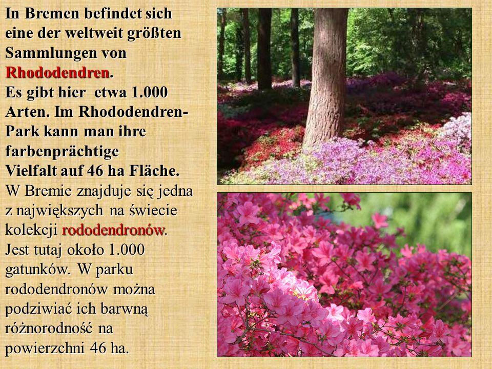 In Bremen befindet sich eine der weltweit größten Sammlungen von Rhododendren. Es gibt hier etwa 1.000 Arten. Im Rhododendren- Park kann man ihre farb