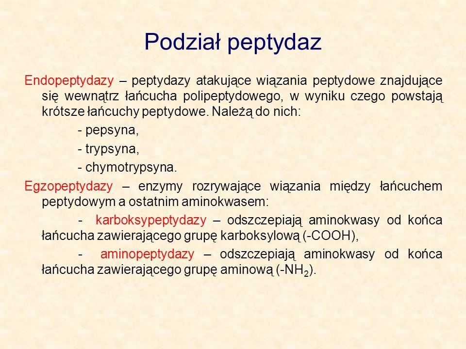 Podział peptydaz Endopeptydazy – peptydazy atakujące wiązania peptydowe znajdujące się wewnątrz łańcucha polipeptydowego, w wyniku czego powstają krót