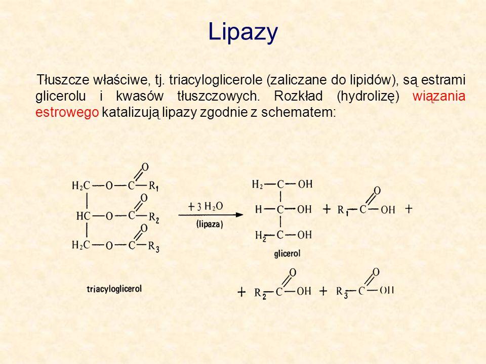 Lipazy Tłuszcze właściwe, tj. triacyloglicerole (zaliczane do lipidów), są estrami glicerolu i kwasów tłuszczowych. Rozkład (hydrolizę) wiązania estro