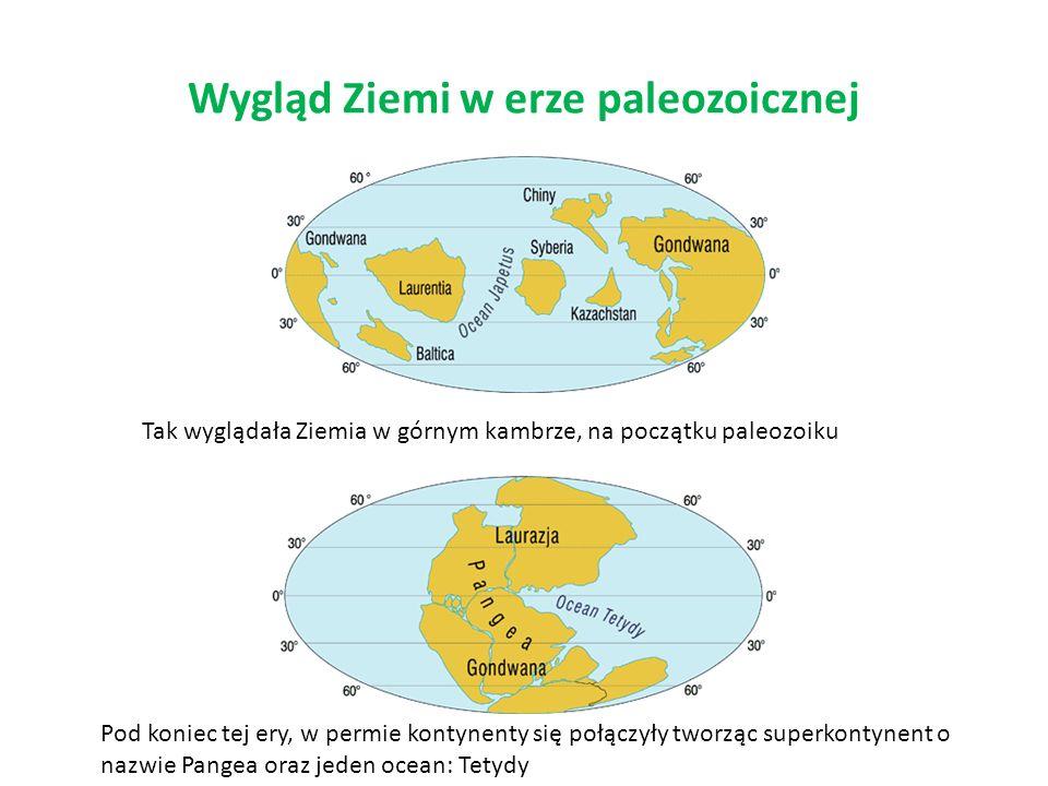 Wygląd Ziemi w erze paleozoicznej Tak wyglądała Ziemia w górnym kambrze, na początku paleozoiku Pod koniec tej ery, w permie kontynenty się połączyły