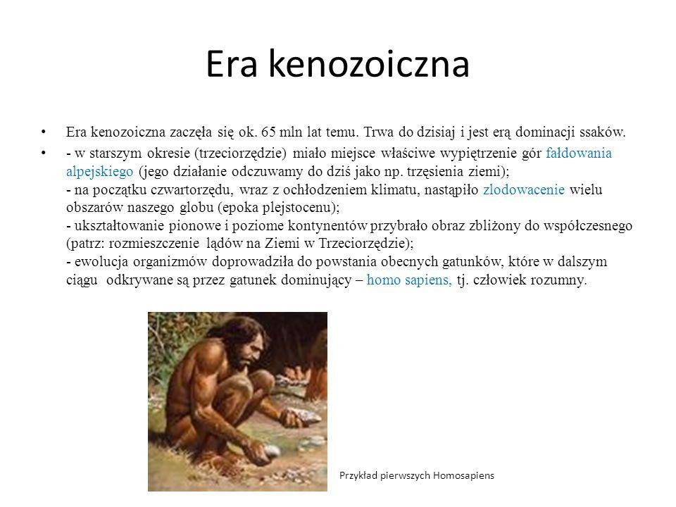 Era kenozoiczna Era kenozoiczna zaczęła się ok. 65 mln lat temu. Trwa do dzisiaj i jest erą dominacji ssaków. - w starszym okresie (trzeciorzędzie) mi