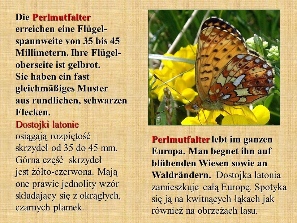 Die Perlmutfalter erreichen eine Flügel- spannweite von 35 bis 45 Millimetern. Ihre Flügel- oberseite ist gelbrot. Sie haben ein fast gleichmäßiges Mu