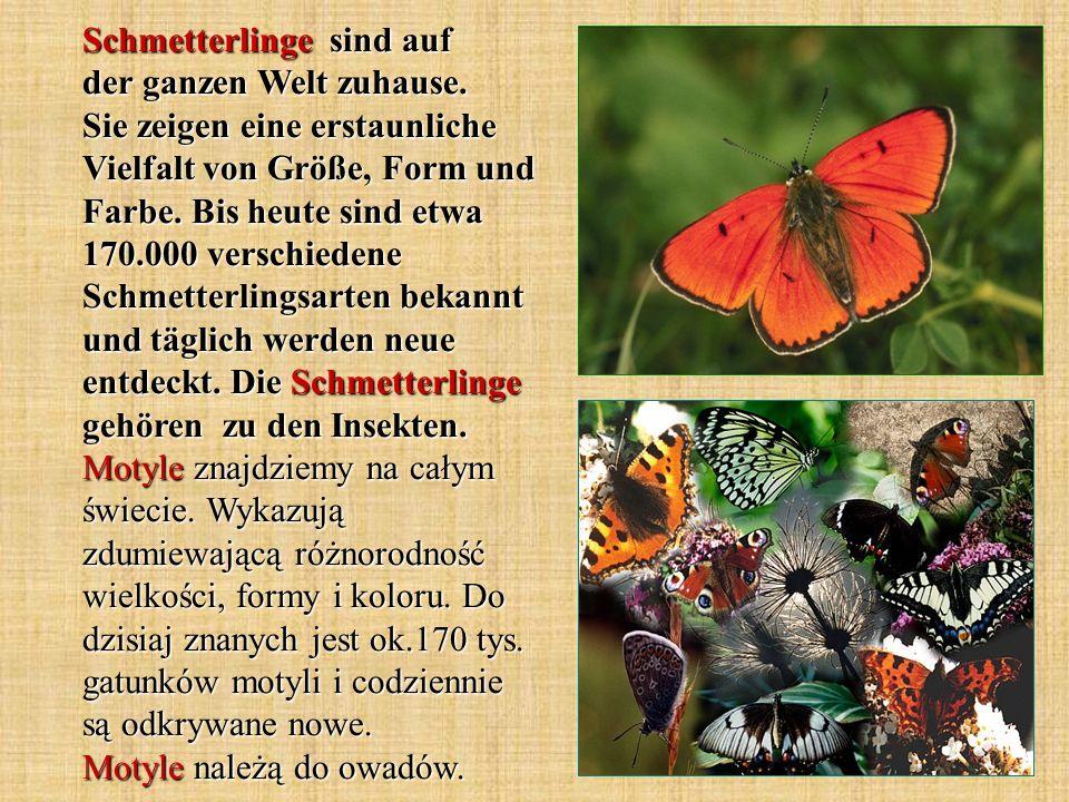 Schmetterlinge durchlaufen in ihrer Entwicklung vier Stadien: Ei, Raupe, Puppe und Falter.