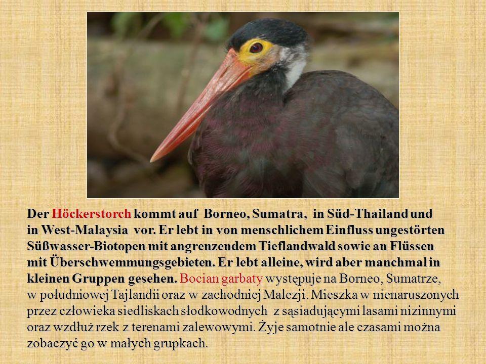 Der Höckerstorch kommt auf Borneo, Sumatra, in Süd-Thailand und in West-Malaysia vor. Er lebt in von menschlichem Einfluss ungestörten Süßwasser-Bioto