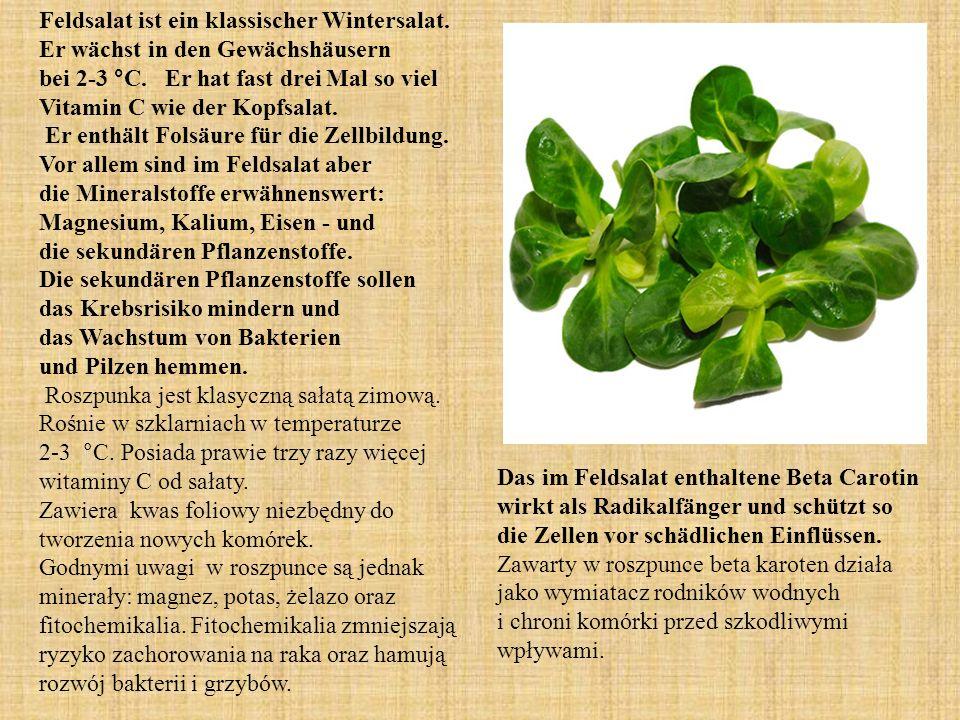 Feldsalat ist ein klassischer Wintersalat. Er wächst in den Gewächshäusern bei 2-3 °C.