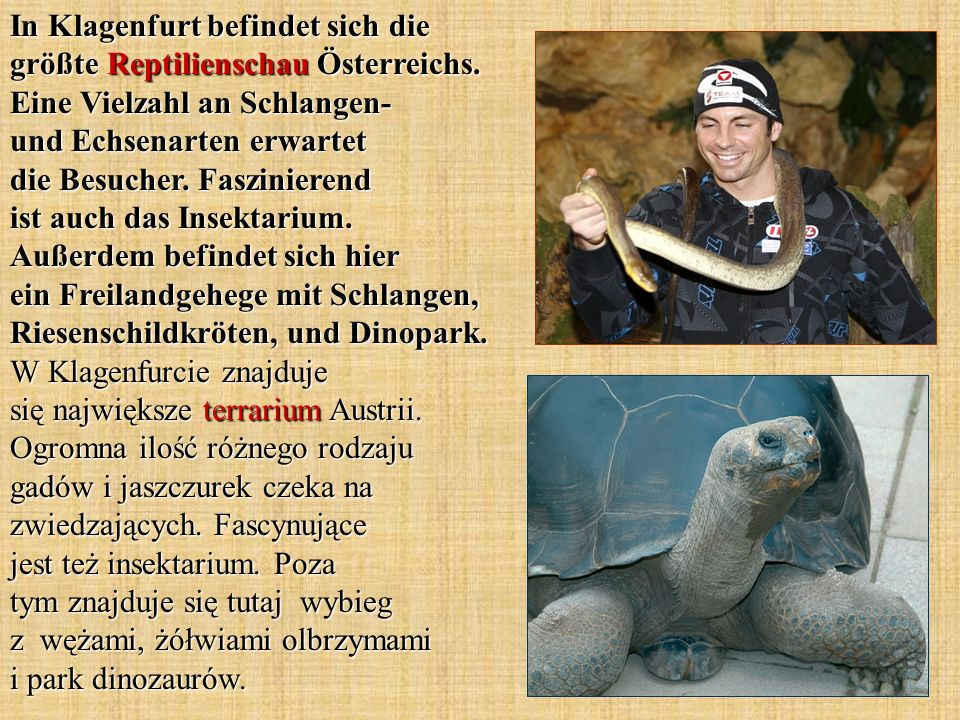In Klagenfurt befindet sich die größte Reptilienschau Österreichs.