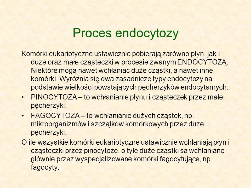 Proces endocytozy Komórki eukariotyczne ustawicznie pobierają zarówno płyn, jak i duże oraz małe cząsteczki w procesie zwanym ENDOCYTOZĄ. Niektóre mog