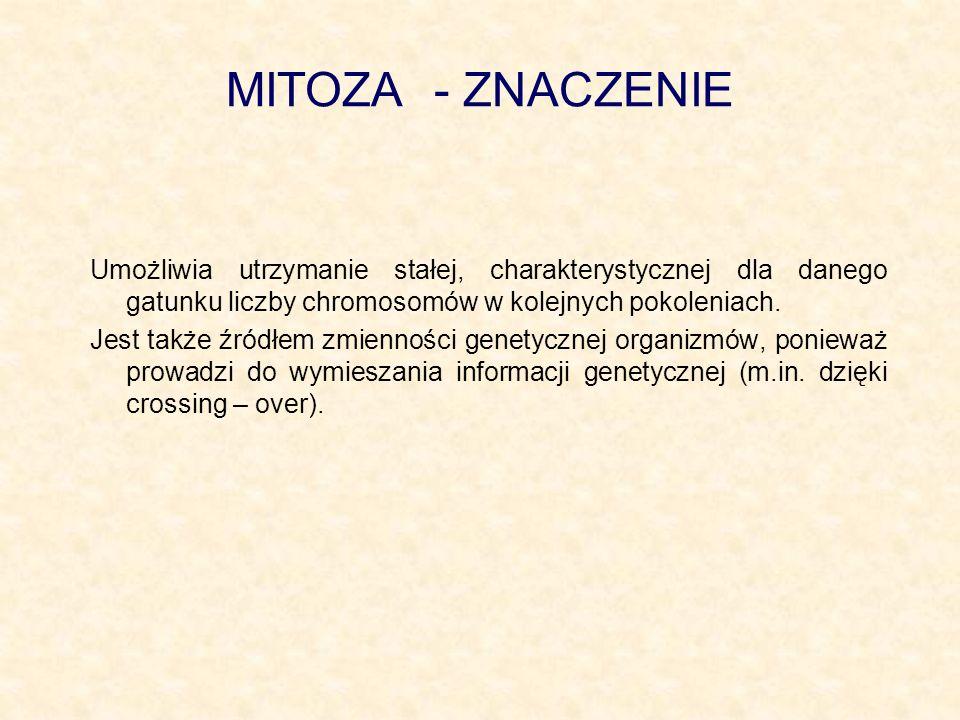 MITOZA - ZNACZENIE Umożliwia utrzymanie stałej, charakterystycznej dla danego gatunku liczby chromosomów w kolejnych pokoleniach. Jest także źródłem z