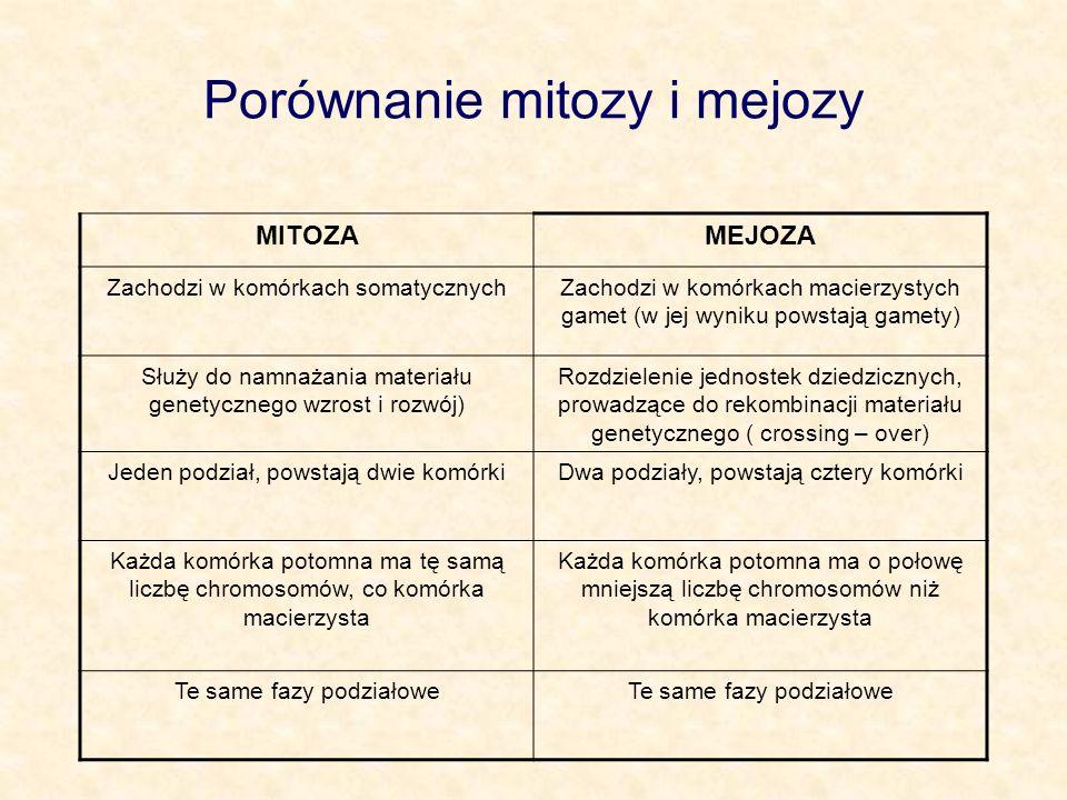 Porównanie mitozy i mejozy MITOZAMEJOZA Zachodzi w komórkach somatycznychZachodzi w komórkach macierzystych gamet (w jej wyniku powstają gamety) Służy