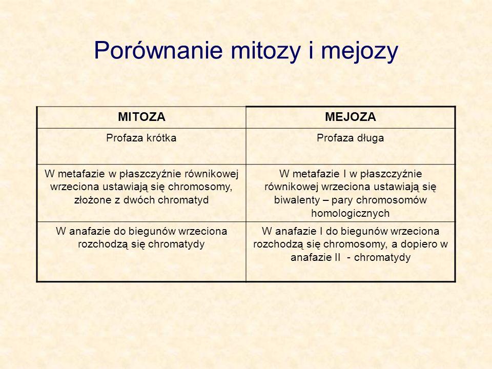 Porównanie mitozy i mejozy MITOZAMEJOZA Profaza krótkaProfaza długa W metafazie w płaszczyźnie równikowej wrzeciona ustawiają się chromosomy, złożone