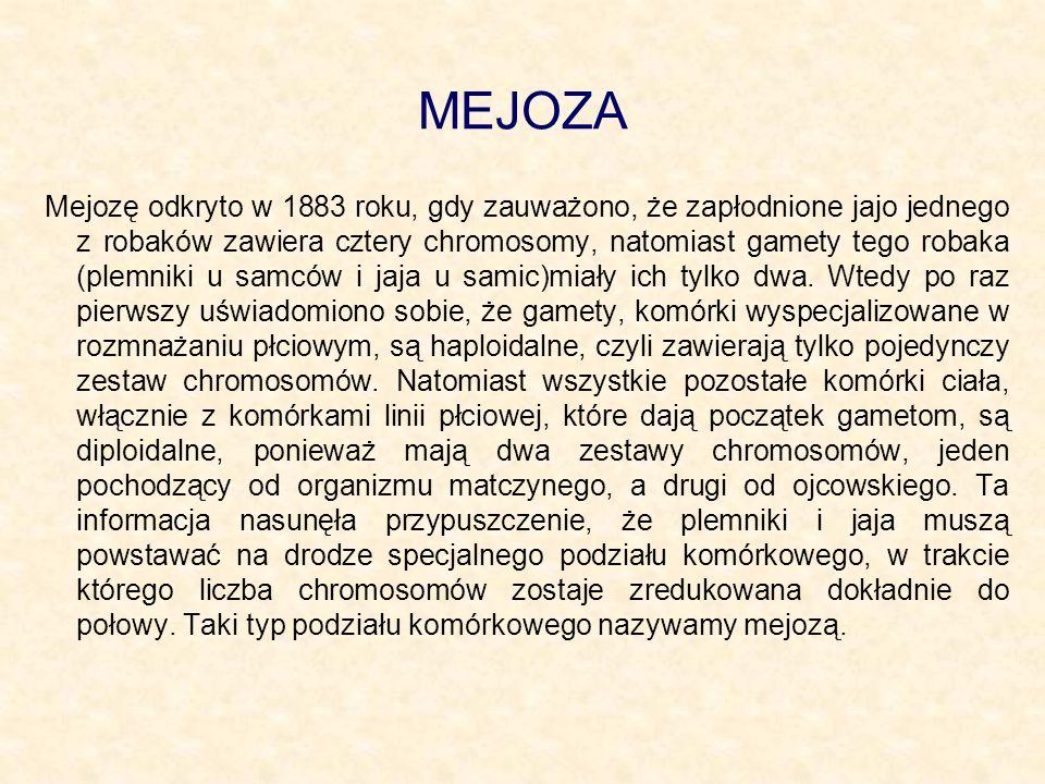 MEJOZA Mejozę odkryto w 1883 roku, gdy zauważono, że zapłodnione jajo jednego z robaków zawiera cztery chromosomy, natomiast gamety tego robaka (plemn