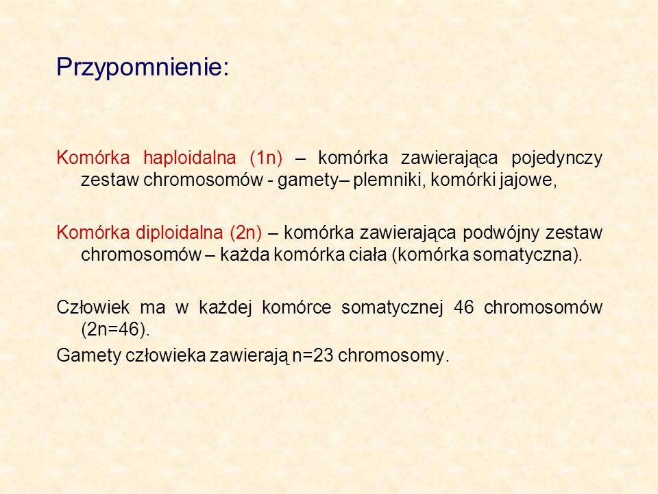 Przypomnienie: Komórka haploidalna (1n) – komórka zawierająca pojedynczy zestaw chromosomów - gamety– plemniki, komórki jajowe, Komórka diploidalna (2