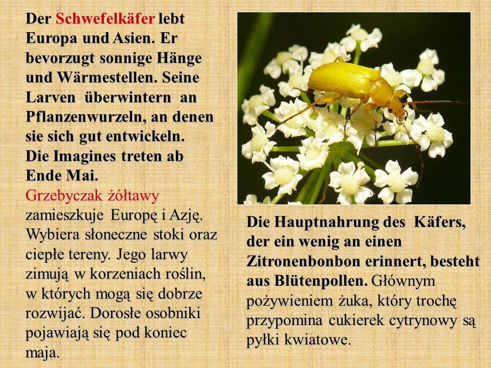 Der Schwefelkäfer lebt Europa und Asien. Er bevorzugt sonnige Hänge und Wärmestellen. Seine Larven überwintern an Pflanzenwurzeln, an denen sie sich g