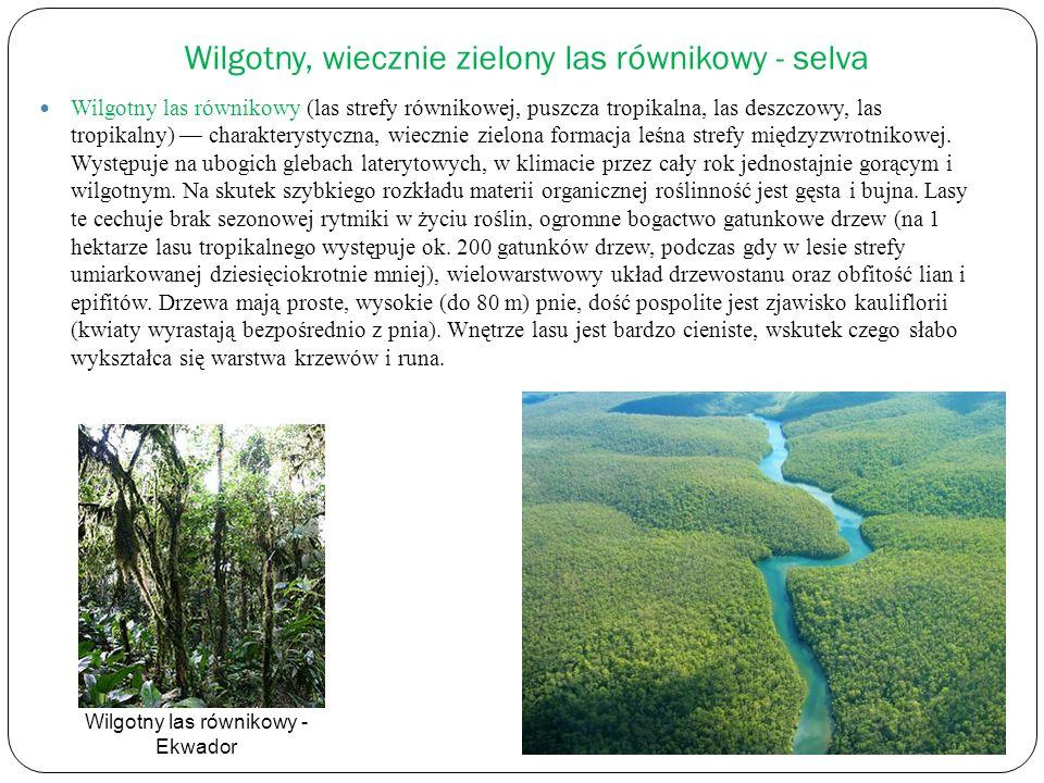 Wilgotny, wiecznie zielony las równikowy - selva Wilgotny las równikowy (las strefy równikowej, puszcza tropikalna, las deszczowy, las tropikalny) cha