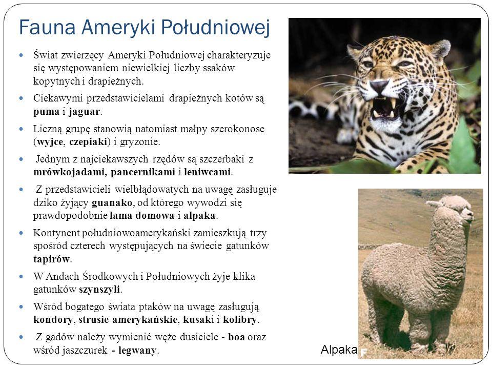 Fauna Ameryki Południowej Świat zwierzęcy Ameryki Południowej charakteryzuje się występowaniem niewielkiej liczby ssaków kopytnych i drapieżnych. Ciek