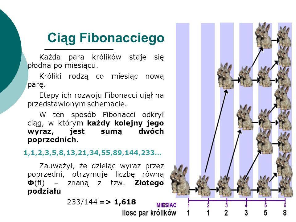 Ciąg Fibonacciego Każda para królików staje się płodna po miesiącu. Króliki rodzą co miesiąc nową parę. Etapy ich rozwoju Fibonacci ujął na przedstawi