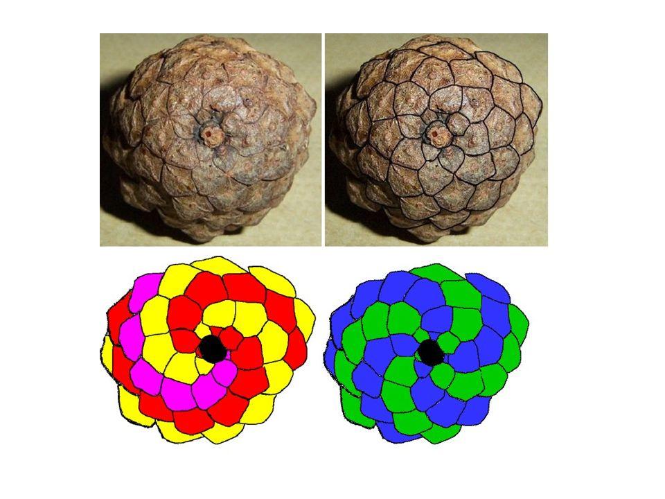 Ciąg Fibonacciego