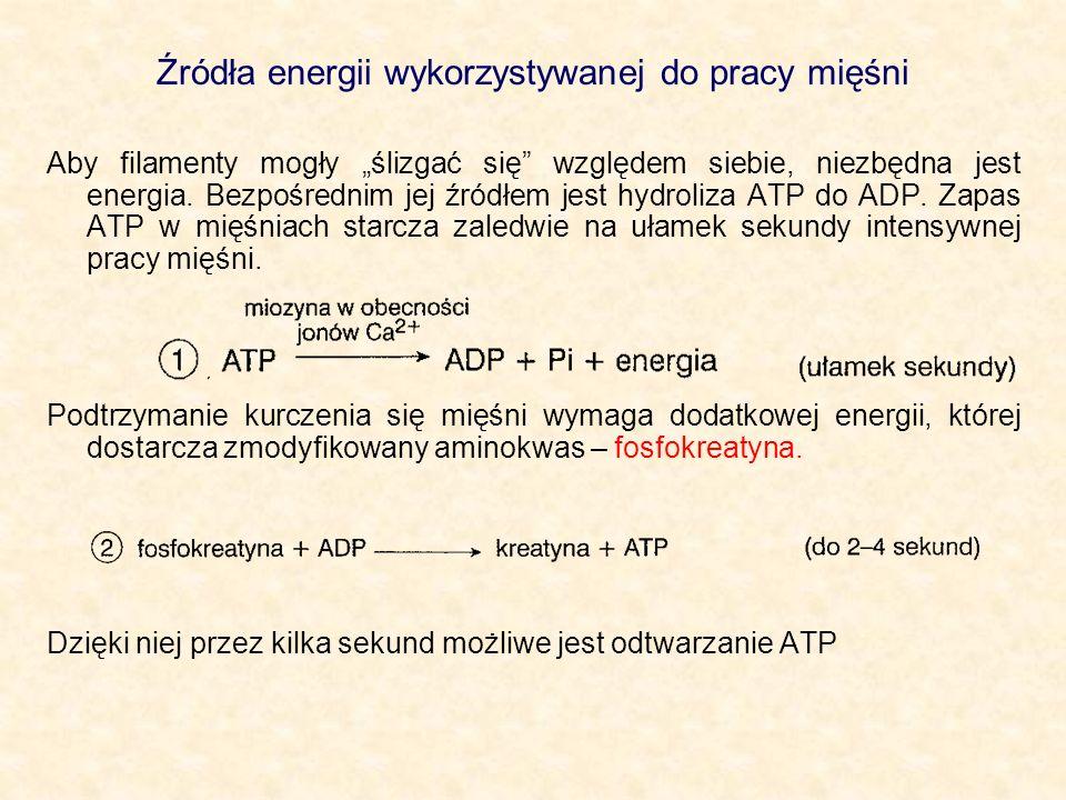 Źródła energii wykorzystywanej do pracy mięśni Aby filamenty mogły ślizgać się względem siebie, niezbędna jest energia. Bezpośrednim jej źródłem jest