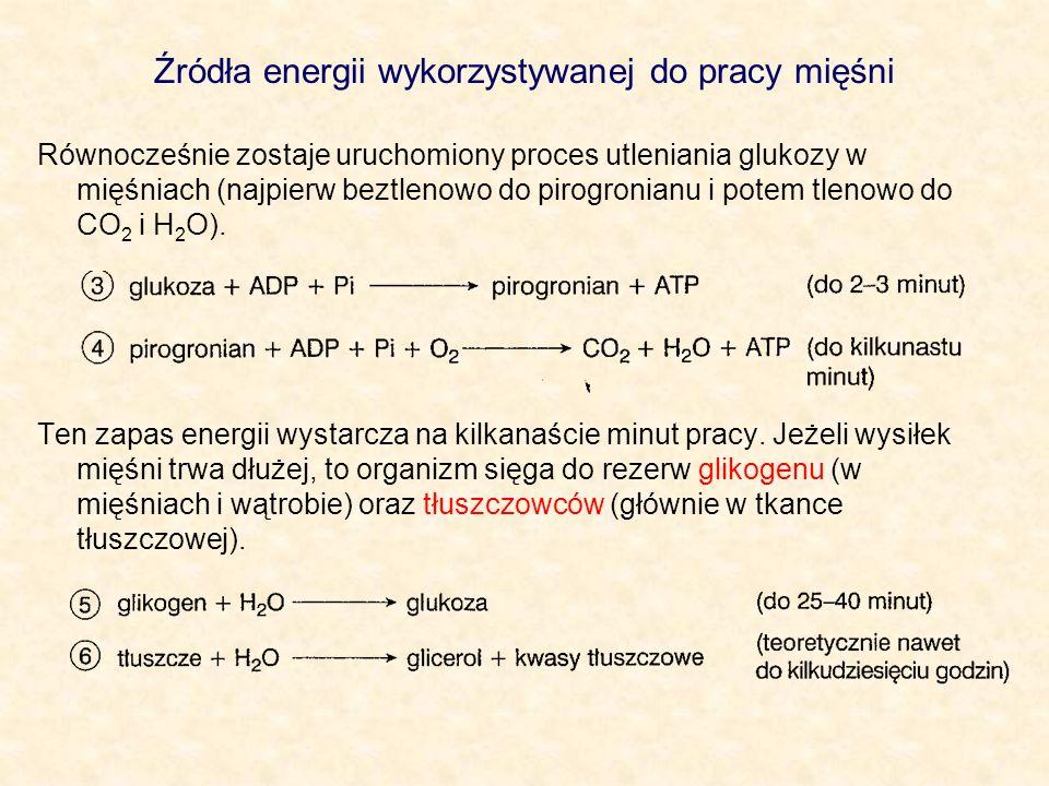 Źródła energii wykorzystywanej do pracy mięśni Równocześnie zostaje uruchomiony proces utleniania glukozy w mięśniach (najpierw beztlenowo do pirogron