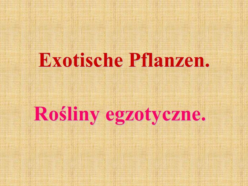 Exotische Pflanzen. Rośliny egzotyczne.