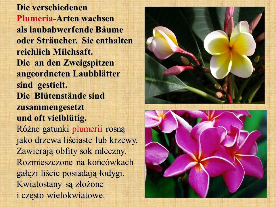 Die verschiedenen Plumeria-Arten wachsen als laubabwerfende Bäume oder Sträucher. Sie enthalten reichlich Milchsaft. Die an den Zweigspitzen angeordne
