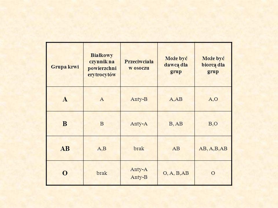 Grupa krwi Białkowy czynnik na powierzchni erytrocytów Przeciwciała w osoczu Może być dawcą dla grup Może być biorcą dla grup A AAnty-BA,ABA,O B BAnty