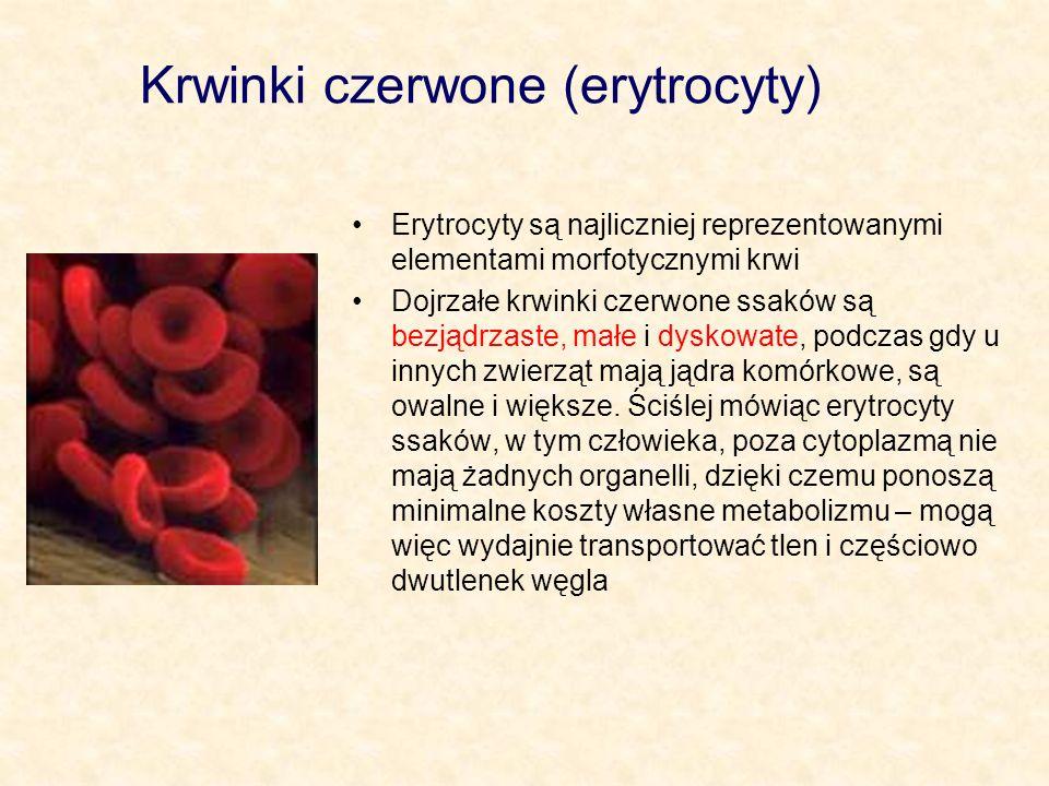 Krwinki czerwone (erytrocyty) Powstają w czerwonym szpiku kostnym z erytroblastów, żyją około 100 - 120 dni, po czym są degradowane w śledzionie i wątrobie Ich liczba utrzymywana jest na stałym poziomie: u mężczyzn około 5,4 mln/mm 3 krwi u kobiet około 4,5 mln/ mm 3 krwi Nie mają zdolności do aktywnego ruchu – przenoszone są biernie z prądem krwi Ich zasadniczą funkcją jest transport tlenu i częściowo dwutlenku węgla, co jest możliwe dzięki obecności w krwince hemoglobiny, która ma zdolność nietrwałego wiązania tlenu