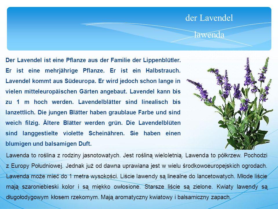 der Lavendel lawenda Der Lavendel ist eine Pflanze aus der Familie der Lippenblütler.