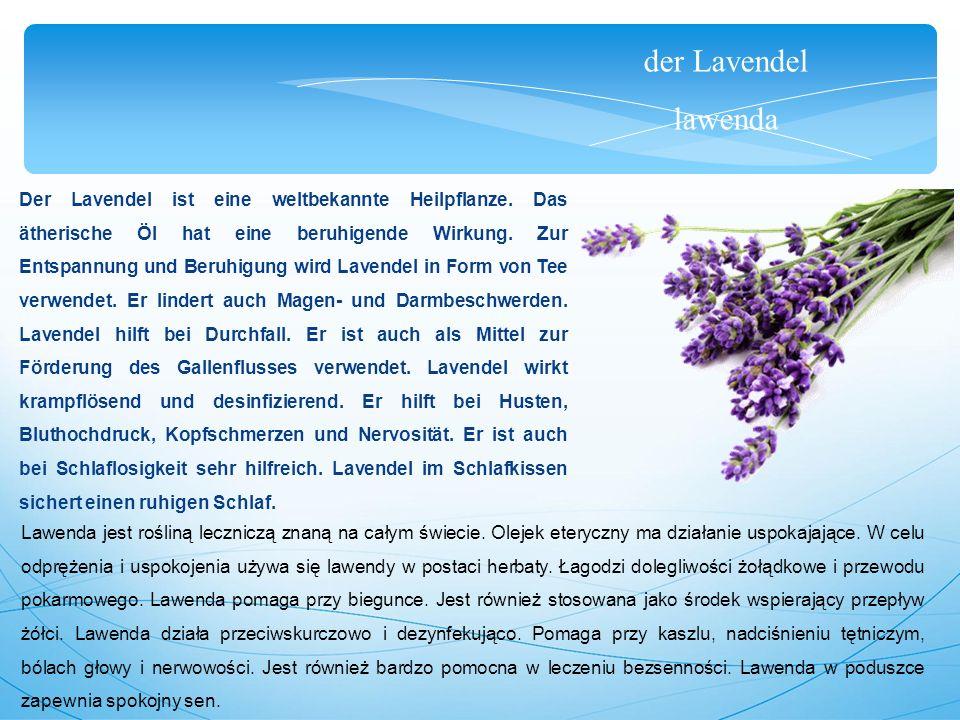 der Lavendel lawenda Der Lavendel ist eine weltbekannte Heilpflanze.