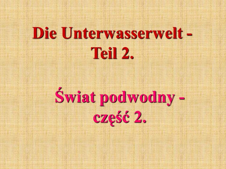 Die Unterwasserwelt - Teil 2. Świat podwodny - część 2.