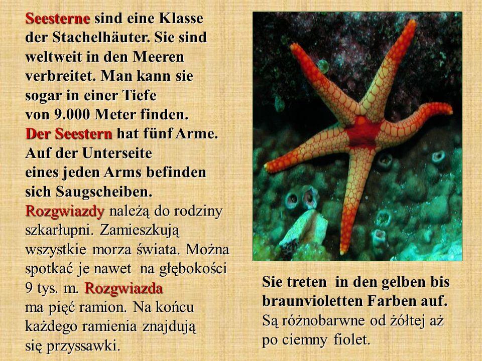 die Moostierchen - mszywioły die Wassertiere - zwierzęta wodne der Aal - węgorz durchsichtig - przezroczysty der Kaiserfisch - skalar in den tropischen Bereichen - w tropikalnych rejonach stark abgeflachte Tiere - mocno spłaszczone zwierzęta sind anders gefärbt - są inaczej ubarwione die Seeanemonen - ukwiały flügelähnliche Flossen - płetwy podobne do skrzydeł unter der Wasseroberfläche - pod powierzchnią wody Wörter und Wendungen.